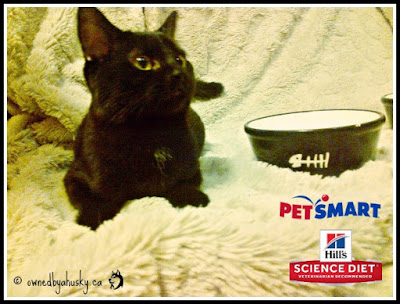 Introducing: Hill's® Science Diet® Urinary And Hairball Control Cat Food
