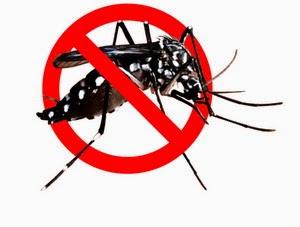 Cara Efektif Mengusir Nyamuk Nakal
