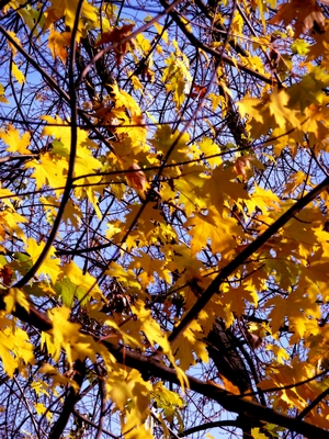 images of fall trees