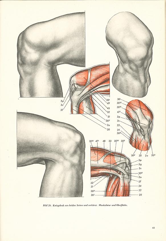 """Research of Artistic Anatomy: Wilhelm Tank """"FORM UND FUNKTION EINE ..."""