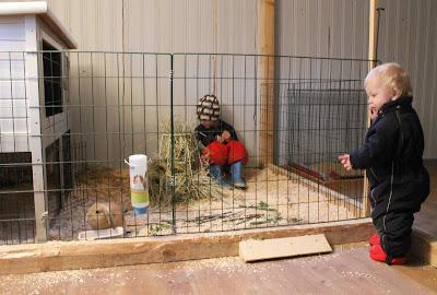 kaninbur med hage