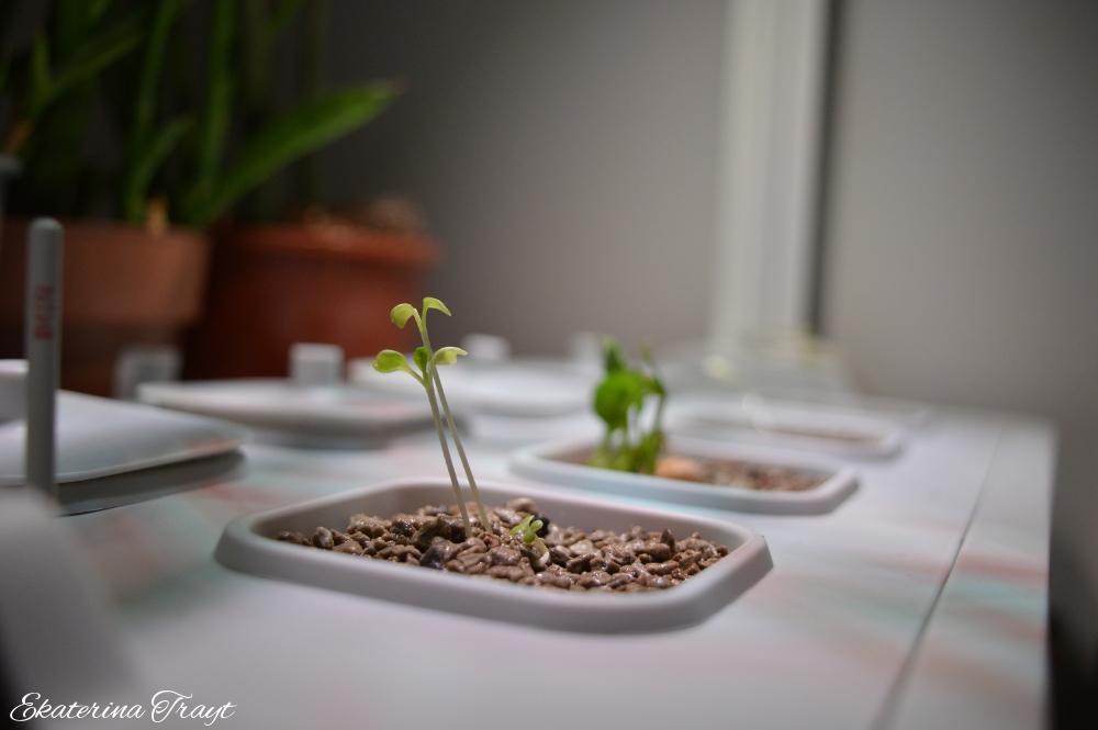 i am entering the world of hydroponics - Ikea Indoor Garden