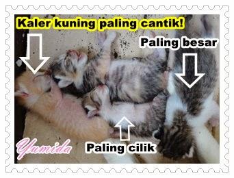 ibu kucing, anak kucing, anak kucing baru lahir