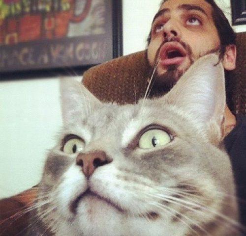 gato, oi, imagens, eu adoro morar na internet