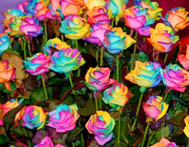 Flores bonitas flores lindas imagens de flores car - Plantas bonitas de interior ...