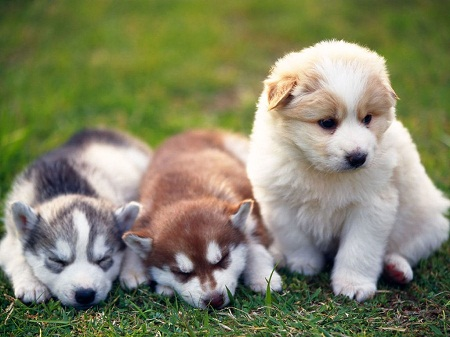 very cute dogs and puppies