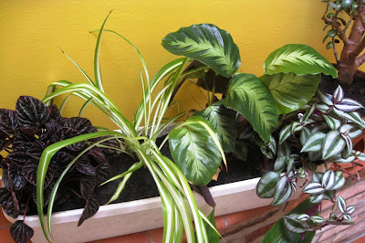 Newly planted house plants in a trough in the hall