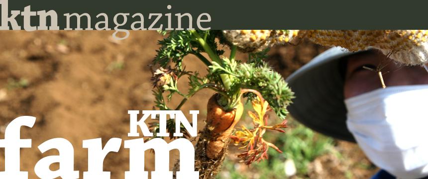 KTN Farm / 無農薬有機畑と遊びの自給自足