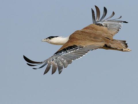 http://4.bp.blogspot.com/-11hFo0VBGPM/TbpeG9FCCDI/AAAAAAAAA4Y/_2U7CZMyVTc/s1600/Indian+Birds.jpg