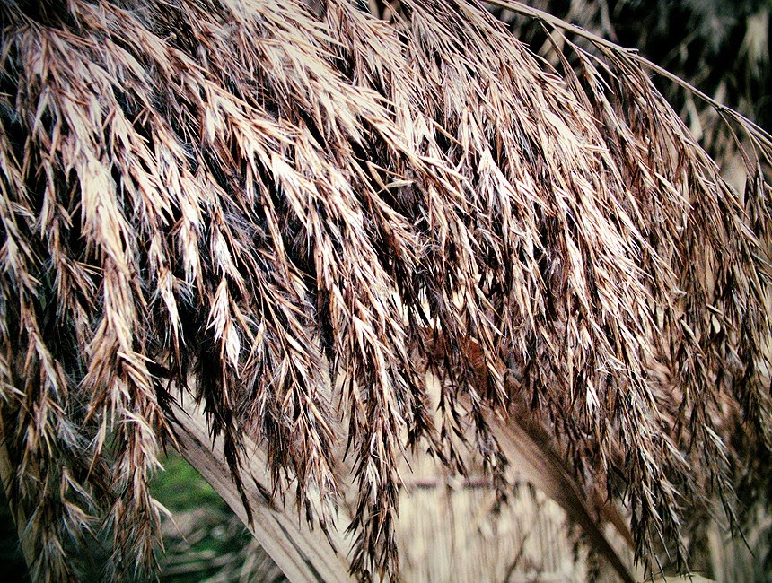 stuf gradina botanica iasi