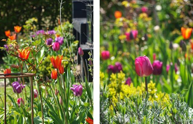 Den moderne have fuld af farverige tulipaner