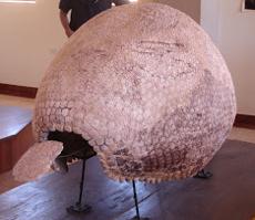 museo pikillacta