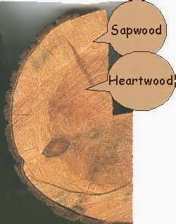 Sap wood vs Heart wood