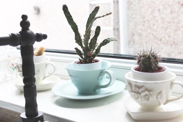 tea cup cacti