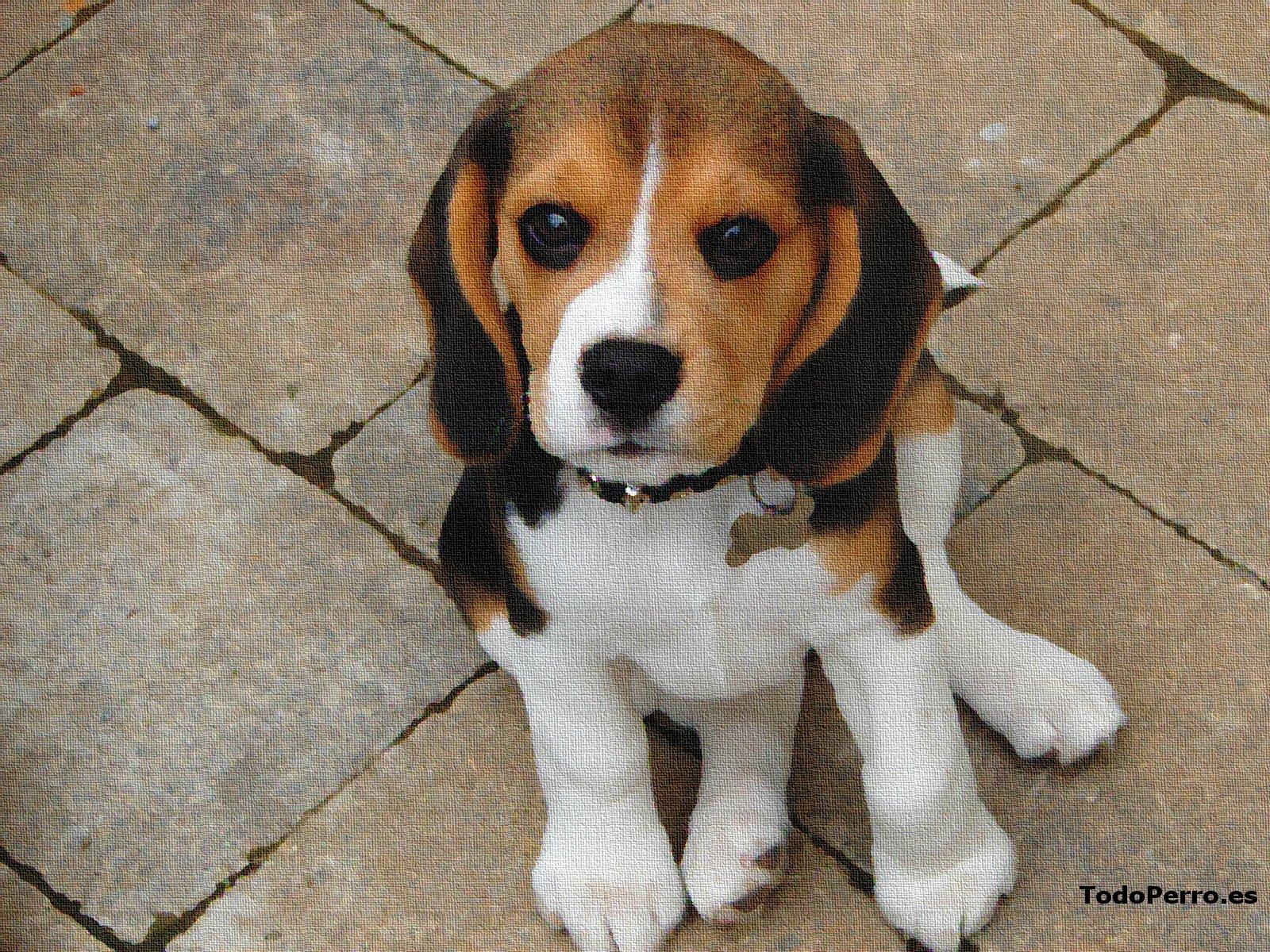 Gallery for nombres de razas de perros peque os y fotos for Comedores pequea os para 4 personas
