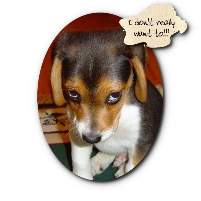 Super Sad Puppy Cartoon Wallpaper Download