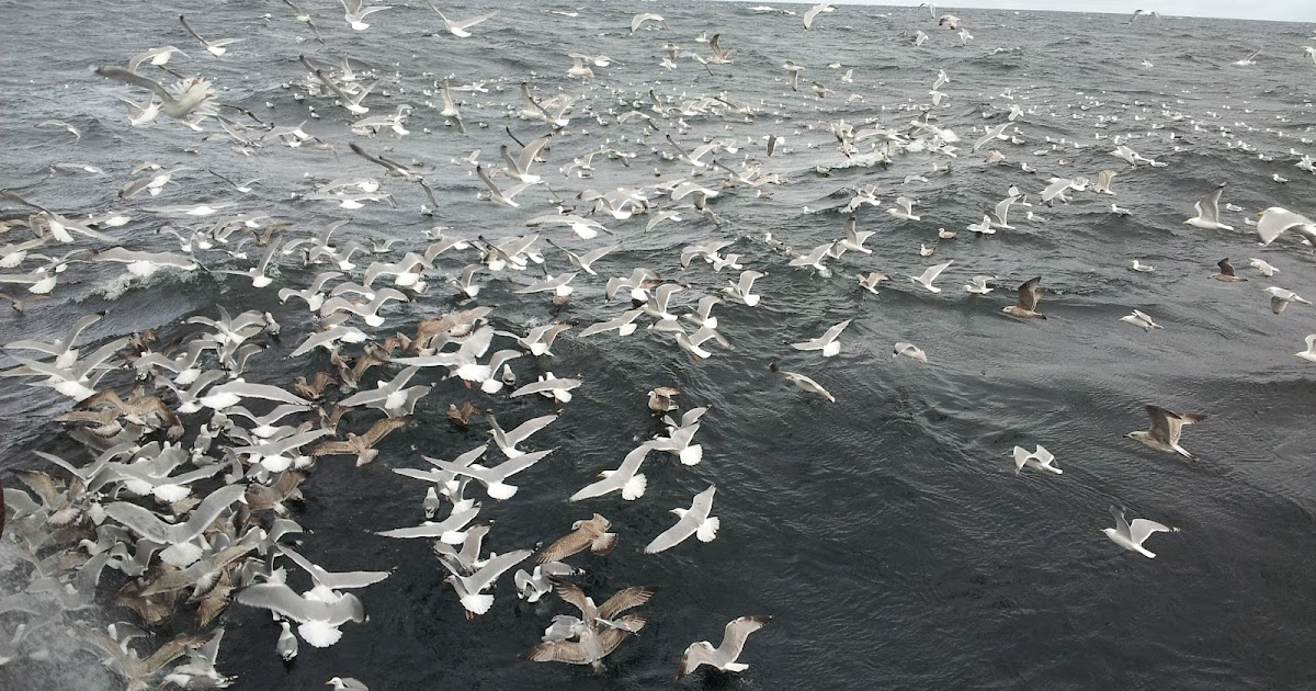 fugl eller fisk norsk dating