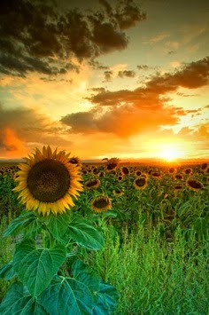 Kata kata mutiara cinta di pagi hari yang indah