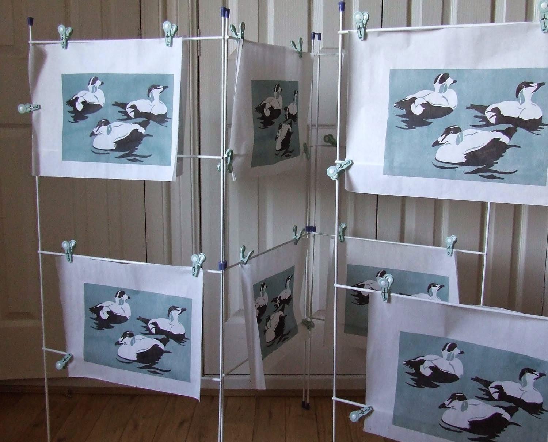 Eider duck prints drying off