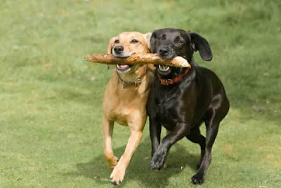 Cute Funny Dogs