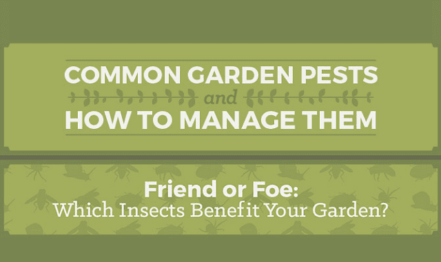Getting Rid of Garden Pests