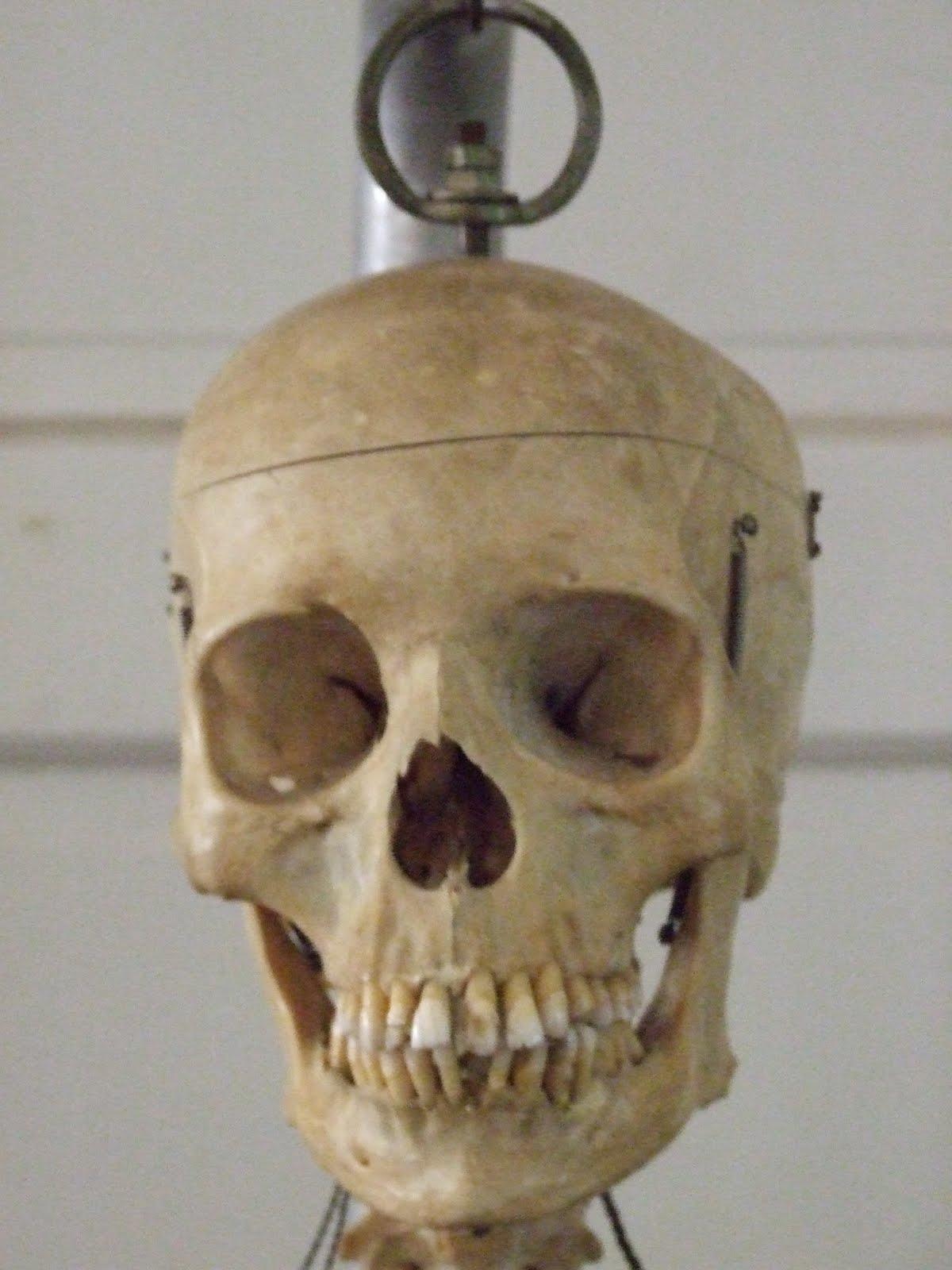 pandora's parlor: vintage real human skeleton for sale!, Skeleton