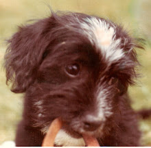 In Loving Memory of Scampy (My Bestest Ever Childhood friend)