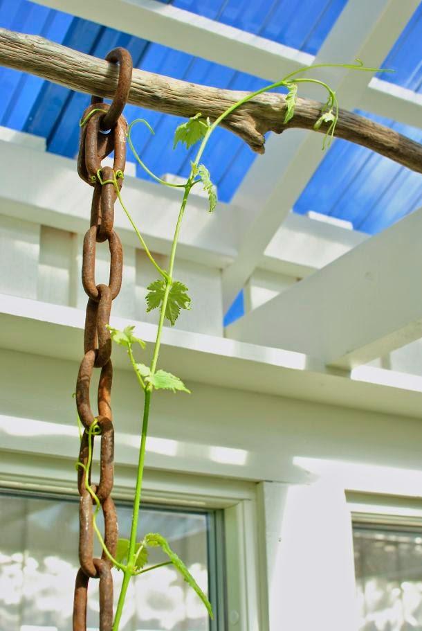 vindruva kedja drivved