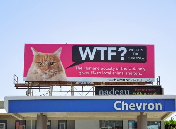 WTF? Where's the funding Humane Watch cat billboard