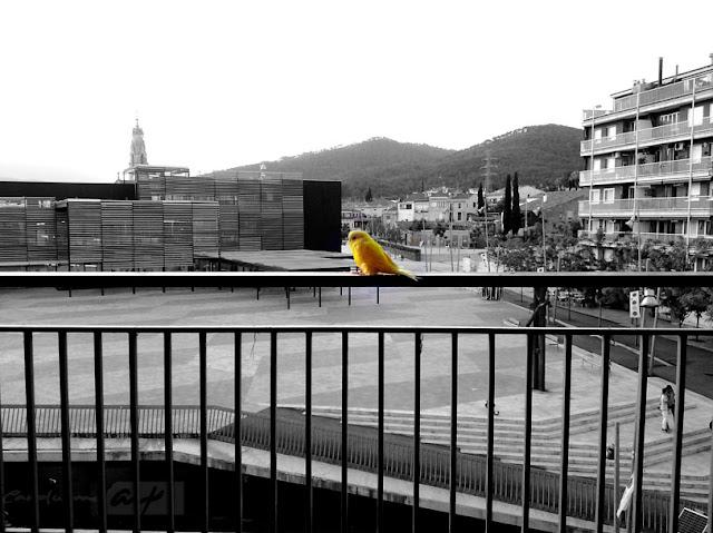 jaulas-libre-pajaro-ave-periquito