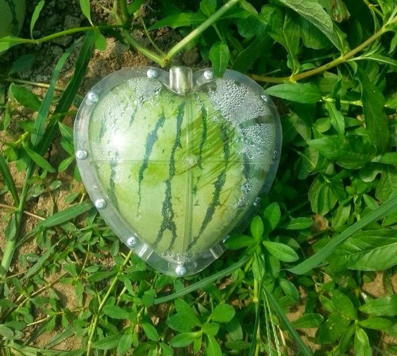 الفاكهة IMG_1754.jpg