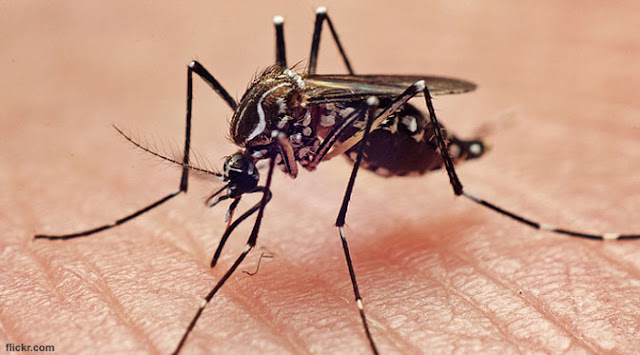 5 Factors That Make Mosquitoes More Like You