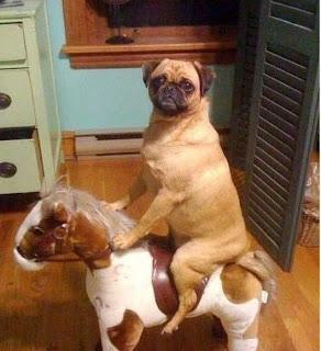 Cão a andar de cavalo