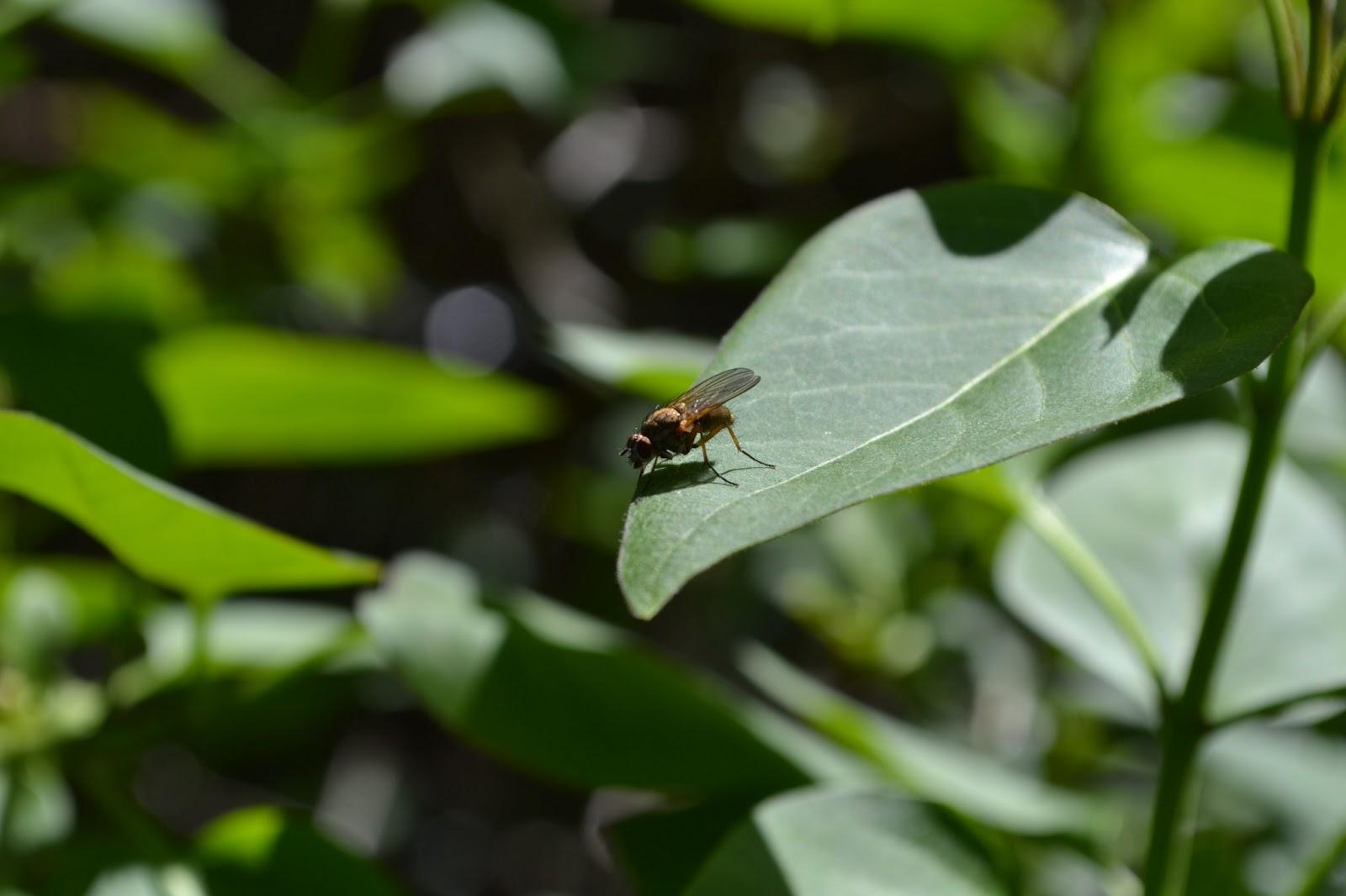 schnauzen bautzers welt pflanzen und insekten im fr hling neue bilder. Black Bedroom Furniture Sets. Home Design Ideas