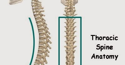 top 5 fridays! 5 more reasons to treat the thoracic spine | modern, Cephalic Vein