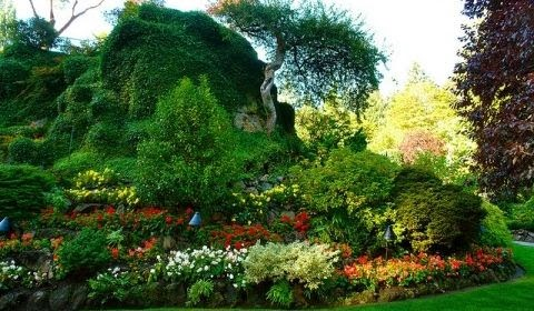 Arte y jardiner a plantas de rocalla for Jardineria y plantas
