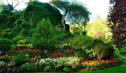 Arte Y Jardiner A Dise O De Jardines Plantas De Rocalla