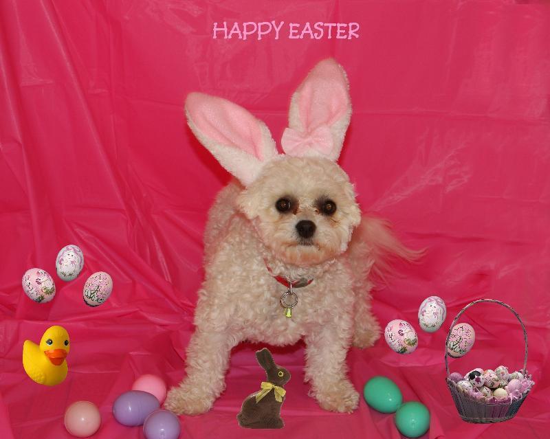 Happy Easter Dog Happy Easter Dog