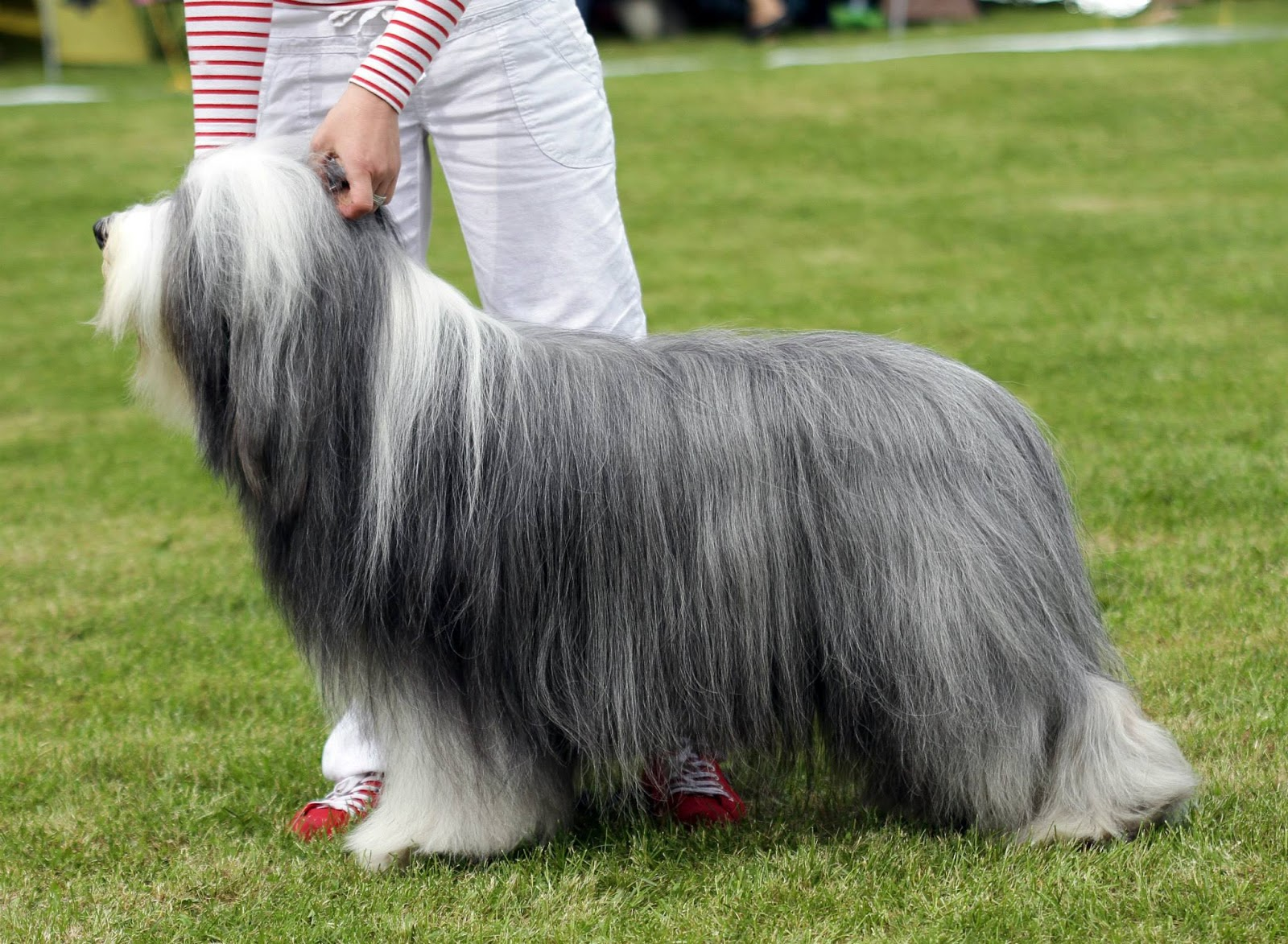 Best in Show - Winners of the International dog show in Kotka (Finland), 15 - 16 August 2015