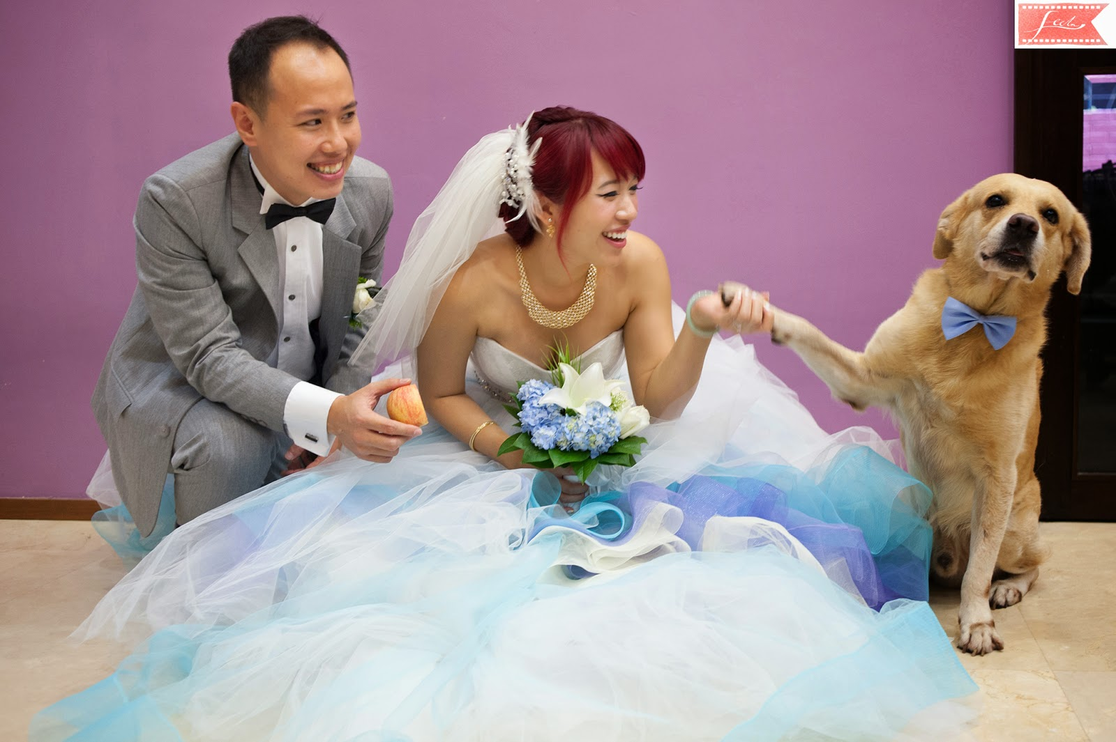 bride and groom dog paw feelm