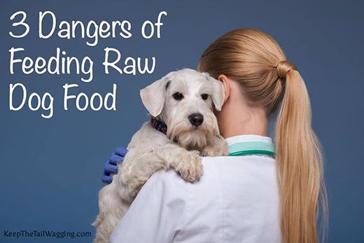 3 Dangers of Feeding Raw Dog Food