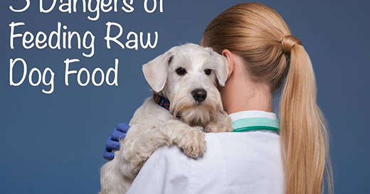 Dangers Of Feeding Raw Food To Dogs