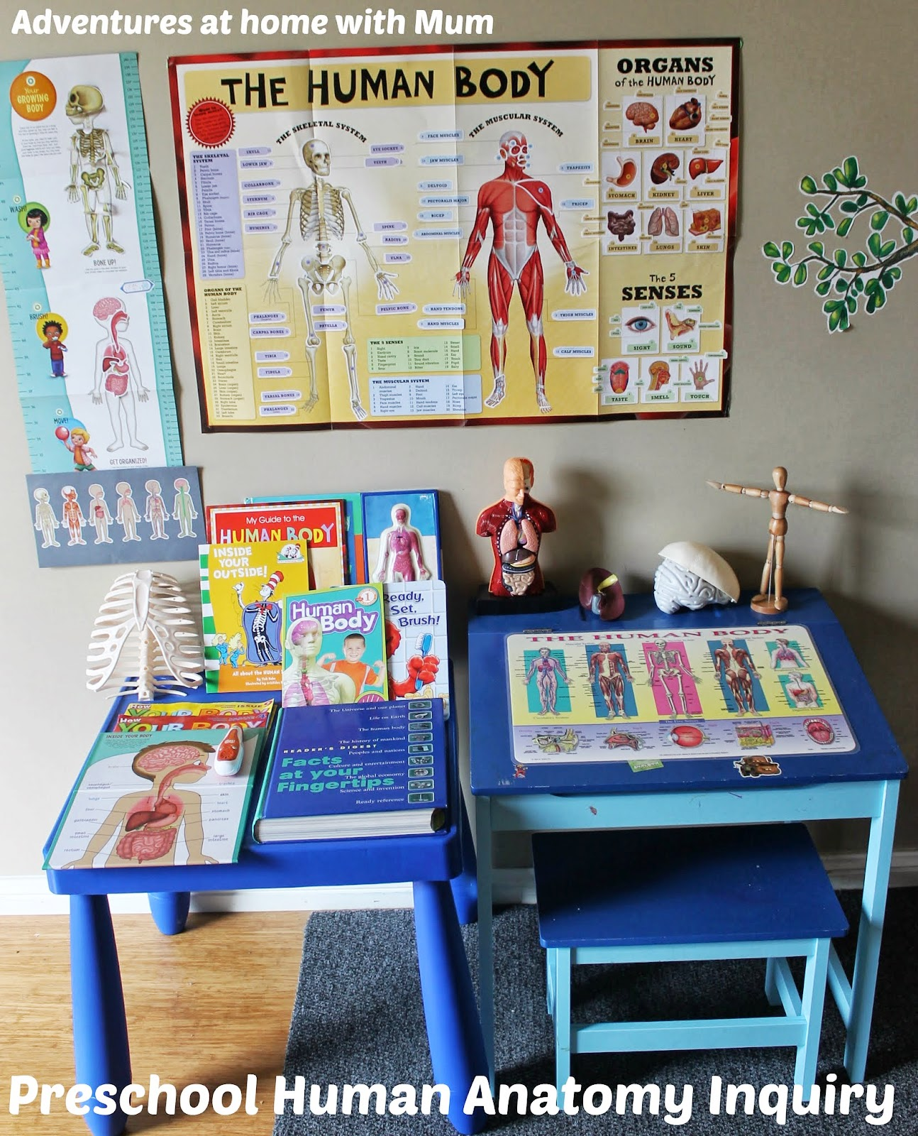 Adventures at home with Mum: Building a Body - Preschool Anatomy
