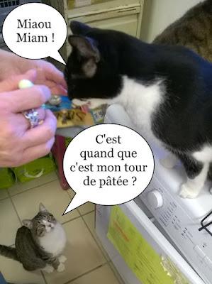 Distribution de pâtée aux chats.