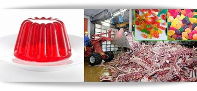 Como é produzido a gelatina