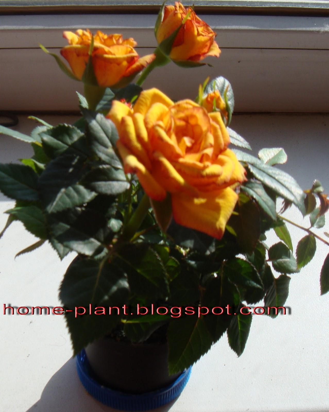 Именины Вали, поздравление Валентине - Поздравок