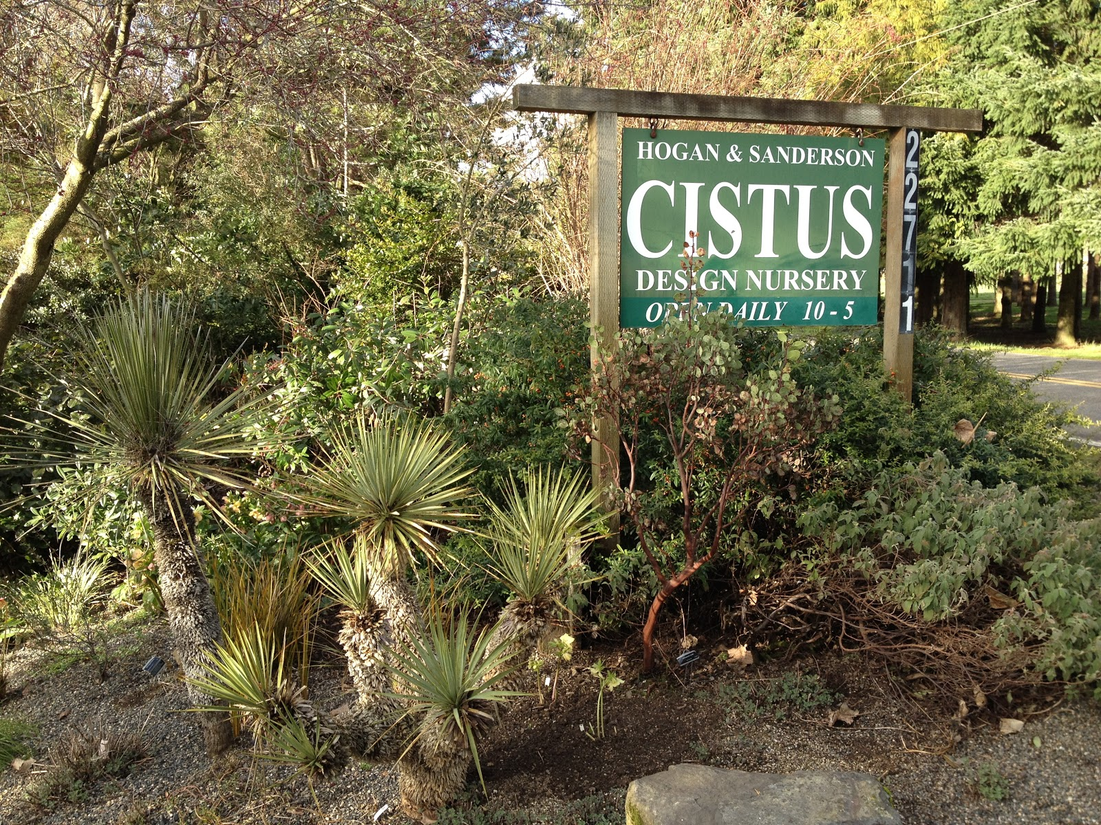 Cistus Nursery Is A Plant Geek S You Won T Find Very Many Fruit Trees Or Frilly Flowers Here Their Specialty In Rare Evergreen Structural