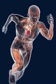 Existe uma ciência inteira para cuidar do seu exercício e boa forma