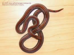 fakta unik ular
