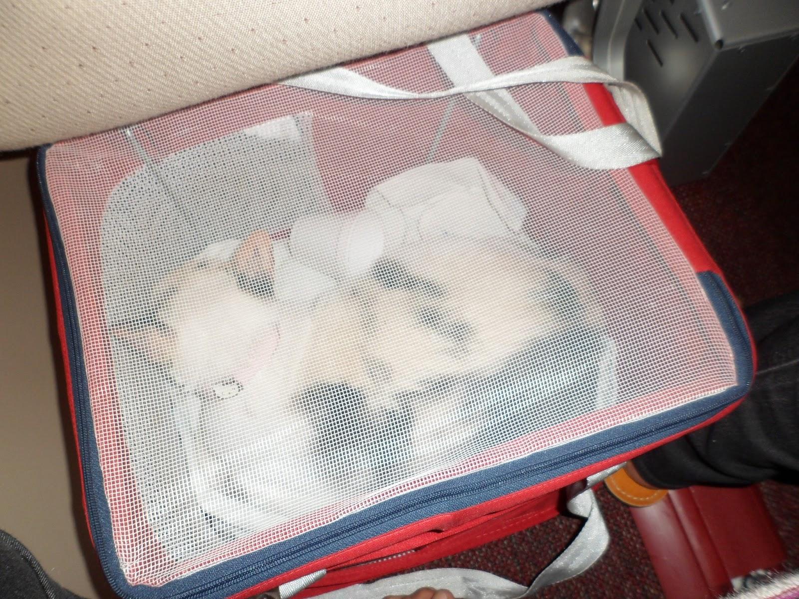Bolsa De Mão No Avião : Gata lili vai viajar de avi?o com seu gato saiba o que